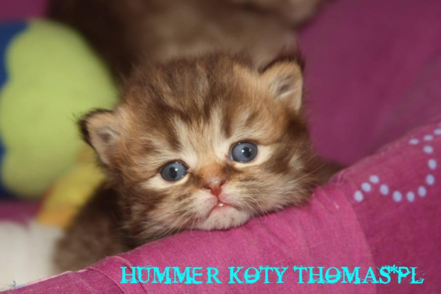 hummer22.jpg