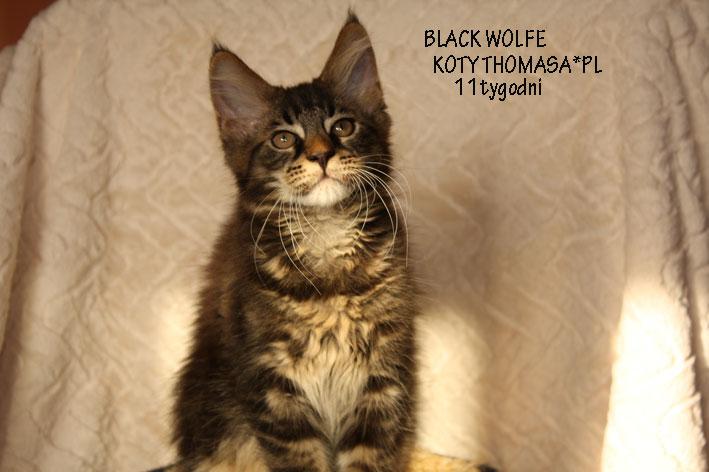 wolfe11ty.jpg